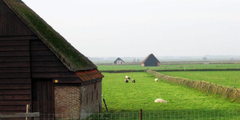 schapenboeten